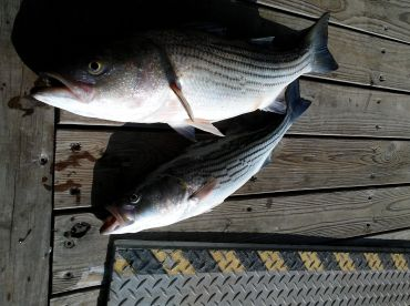 12# and a 5#  Stripe we kept, we threw some other big ones back,