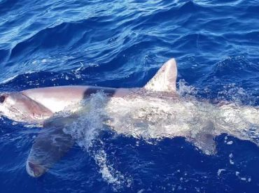 Full Day Swordfish trip with Captain Roberto and mate Leo