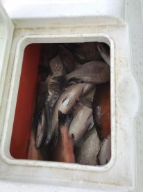 6 Hr. Bottom fishing