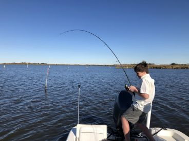Working to net a bull red