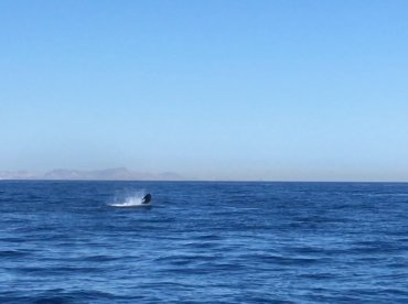 Fishing out of La Paz proper.