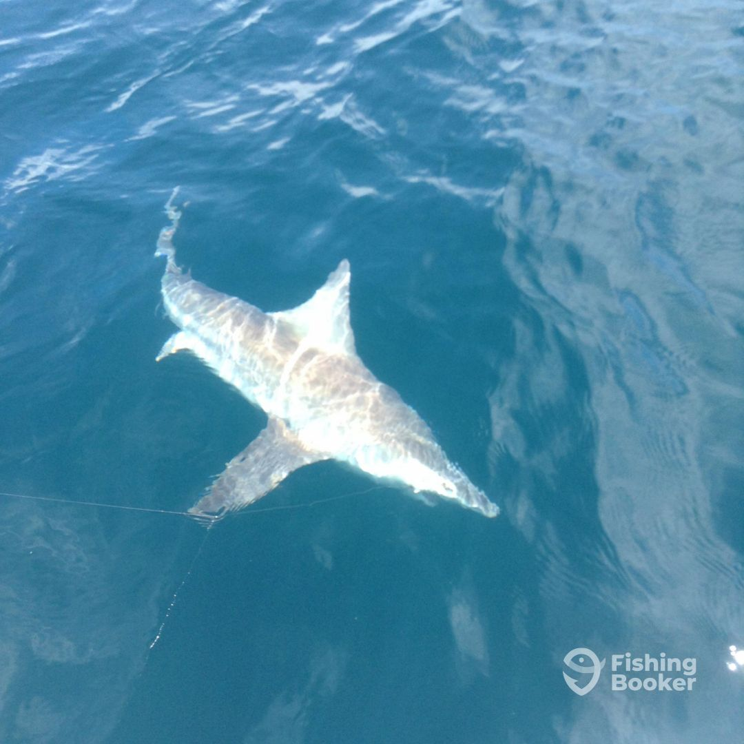Half day trip with capt mark review of port st lucie for Port st lucie fishing charters