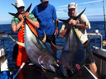Tuna & Yellowtail bonanza