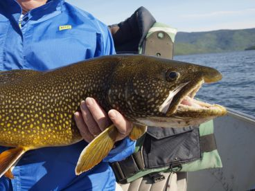Grizzly Creek Lodge is Tops for Shallow Water Fly Angling for Lake Trout