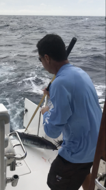Captain bringing in a giant wahoo!