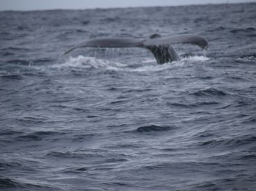 The whales came to see what were up too!