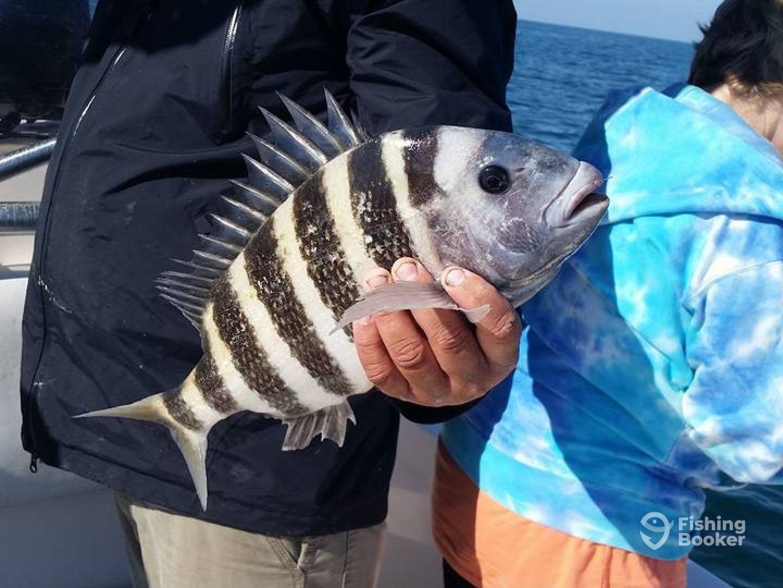 Viel Fisch Tampa