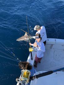 7.5 lb bull shark