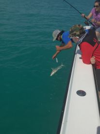 One of three reef sharks