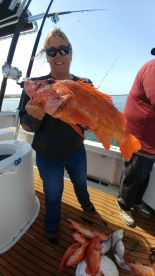 This fish made the southern California fish report