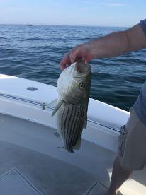 We caught fish!