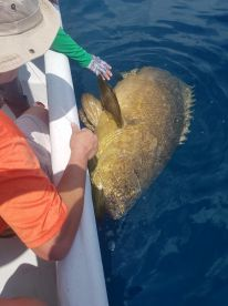 Goliath Grouper!