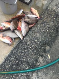 Good Half Day Fishing