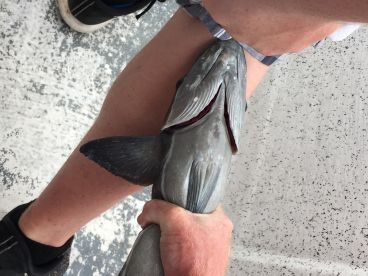 This fish hitched a ride on my sons leg!!!