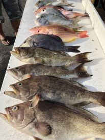 Grouper and snapper