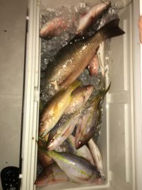 A few of the fish that we caught