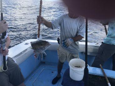 Big Amberjack, even bigger shark